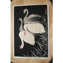 Shoson Ohara: Swan and Reeds - Japanese Art Open Database