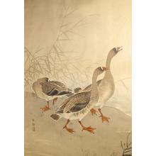 Shoson Ohara: Three Geese - Japanese Art Open Database