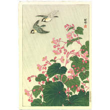 Shoson Ohara: Two Birds and Begonia in Rain - Japanese Art Open Database