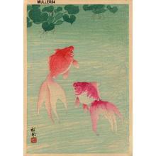 Shoson Ohara: Two Goldfish - Japanese Art Open Database
