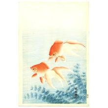 Shoson Ohara: Two Goldfish and waterweed - Japanese Art Open Database