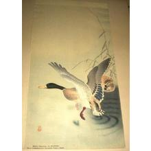Shoson Ohara: Two mallard ducks - Japanese Art Open Database