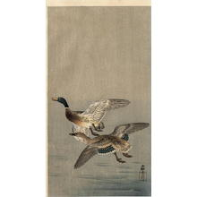 Shoson Ohara: Two mallard ducks in flight above the water - Japanese Art Open Database