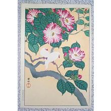 Shoson Ohara: Two small parrots - Japanese Art Open Database