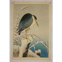 Shoson Ohara: Unknown bird - Japanese Art Open Database