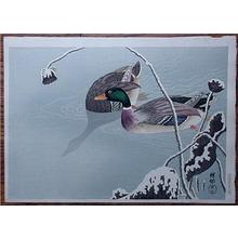 Shoson Ohara: Unknown, ducks in the winter - Japanese Art Open Database