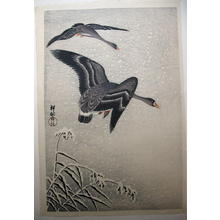 Shoson Ohara: geese flying - Japanese Art Open Database