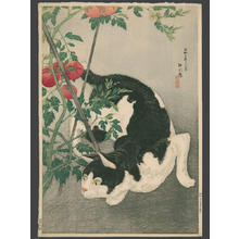 Shotei Takahashi: Black Cat And Tomato Plant - Japanese Art Open Database