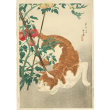 Shotei Takahashi: Brown Cat And Tomato Plant - Japanese Art Open Database