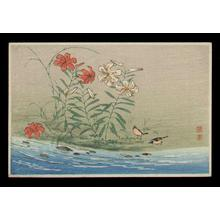 Shotei Takahashi: Lily Blossoms - Japanese Art Open Database