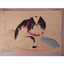 Shotei Takahashi: Pug on a Cushion - Japanese Art Open Database
