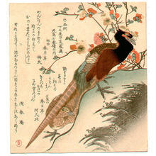 窪俊満: Pheasant - Japanese Art Open Database