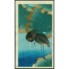Soseki Komori: Gallinule- moorhen - Japanese Art Open Database