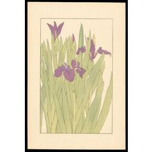 Sugiura Hisui: Dutch Iris - Japanese Art Open Database