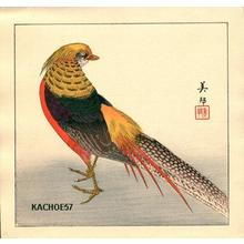 Takahashi Biho: Chinese pheasant - Japanese Art Open Database