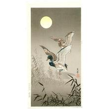 Tsuchiya Koitsu: Ducks - Japanese Art Open Database