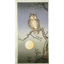 Tsuchiya Koitsu: Owl - Japanese Art Open Database