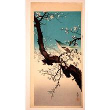 Tsuchiya Koitsu: Plum Nightingale - Japanese Art Open Database