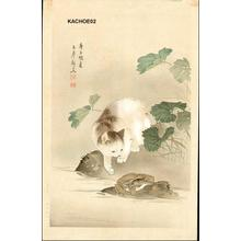 Unknown: Cat and frog toad - Japanese Art Open Database