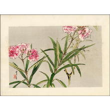 Watanabe Seitei: Orchids - Japanese Art Open Database