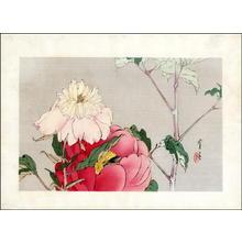 Watanabe Seitei: Peony and Bee - Japanese Art Open Database