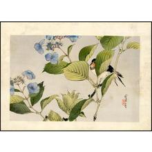 Watanabe Seitei: Songbird on Flower - Japanese Art Open Database