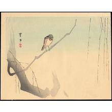 Watanabe Seitei: Bird on willow branch - Japanese Art Open Database