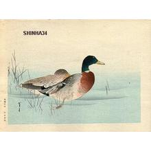 Watanabe Seitei: Mallard Ducks - Japanese Art Open Database