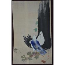 Watanabe Seitei: Two Doves - Japanese Art Open Database