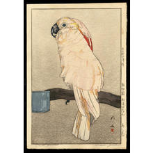 吉田博: Obatan Parrot - Japanese Art Open Database