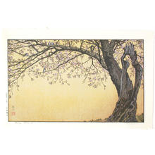 Yoshida Toshi: Cherry Blossoms - Japanese Art Open Database