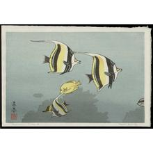 Yoshida Toshi: Hawaiian Fishes A - Japanese Art Open Database