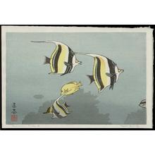 吉田遠志: Hawaiian Fishes A - Japanese Art Open Database