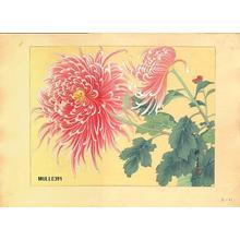 Zuigetsu Ikeda: Chrysanthemum - Japanese Art Open Database