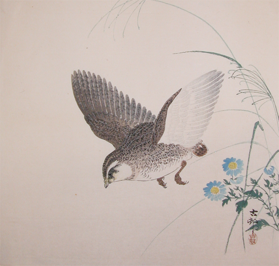 Koson Quail in Flight ...
