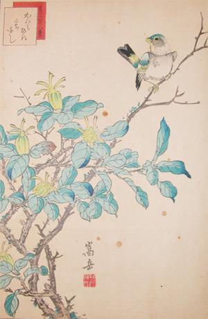 Sugakudo: Siskin and Gardenia - Ronin Gallery