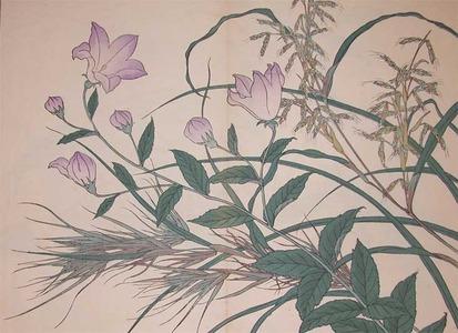 Sakai Hoitsu: Balloon Flower and Reed Grass - Ronin Gallery