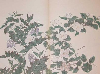 Sakai Hoitsu: Japanese Kerria and Chinese Liquorice - Ronin Gallery