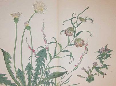 Sakai Hoitsu: Dandelion, Bell Flower、Chinese Spiranthe、Fri - Ronin Gallery