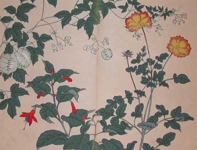 Sakai Hoitsu: Golden Tickseed、Fuchsia and Ballon Vine - Ronin Gallery