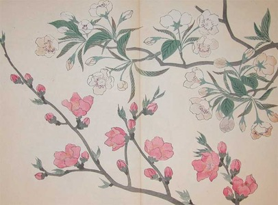 Sakai Hoitsu: Pear and Peach Blossoms - Ronin Gallery