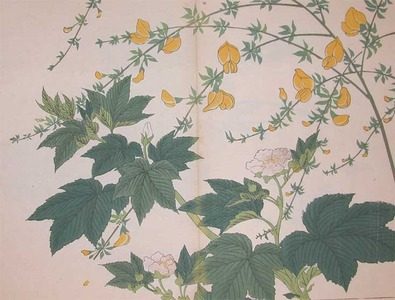 Sakai Hoitsu: Scotch Broom and Raspberry - Ronin Gallery