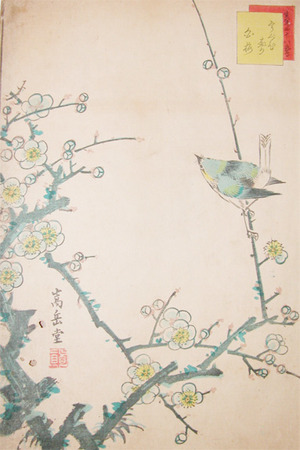 Sugakudo: Bush Warbler and White Plum Blossoms - Ronin Gallery