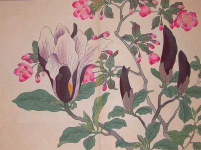 Sakai Hoitsu: Blossoming Cherry and Magnolia - Ronin Gallery