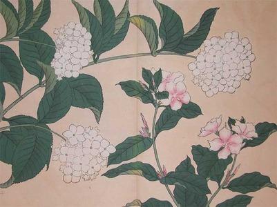 Sakai Hoitsu: Periwinkle and Hydrangea - Ronin Gallery