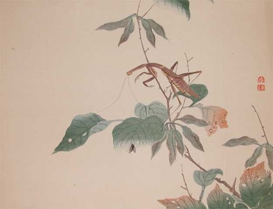 Watanabe Shotei: Praying Mantis and a fly - Ronin Gallery