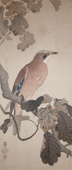 Koson: Jay on Oak Branch - Ronin Gallery