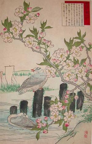 Kono Bairei: Cherry Blossoms and Sea Gulls - Ronin Gallery