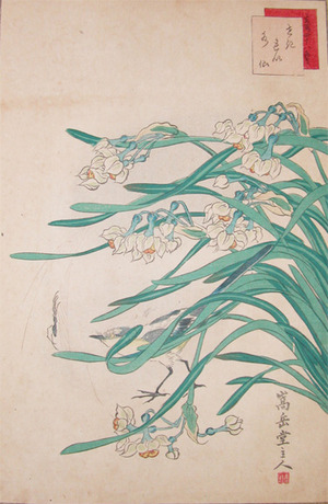 Sugakudo: Water-wagtail, Spider and Narcissus - Ronin Gallery