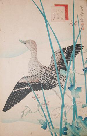 Sugakudo: Gray Tailed Tattler and Morning Glories - Ronin Gallery